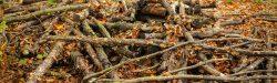 Haveaffaldsordning efterår 2018